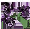 Орхидеи - магазин Орхидей