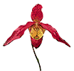 Субстраты для орхидей - магазин Орхидей