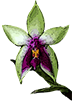 Энциклопедия орхидей - магазин Орхидей
