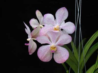 Aranda Chao Phaya Beauty